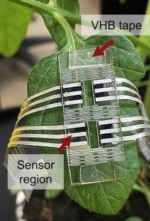 Plant VOC Sensor