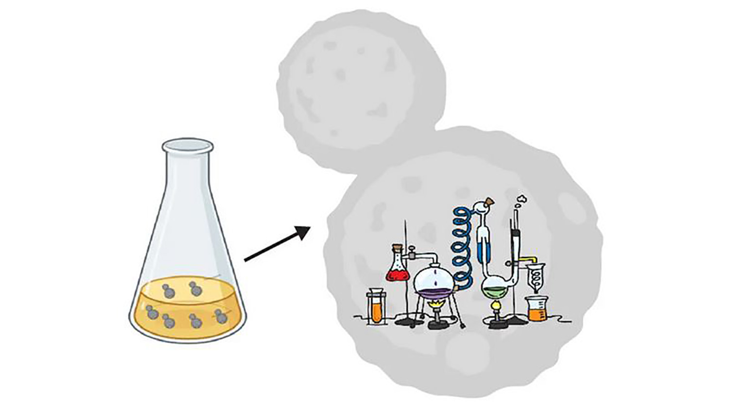 Using yeast cells to study gene regulation conceptual drawing